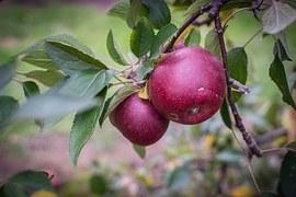 apple-535542__180.jpg