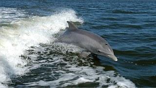 dolphin-1167996__180.jpg