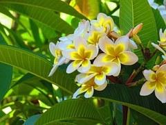 flower-1051660__180.jpg