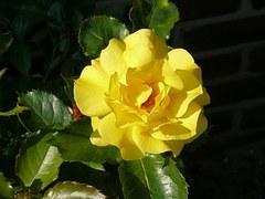 flower-953690__180.jpg