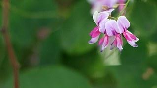flower-953786__180.jpg