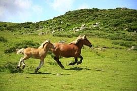 horses-1123042__180.jpg