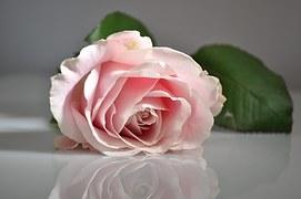 rose-1109628__180.jpg
