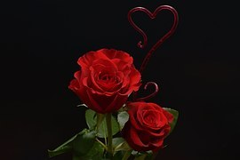 roses-1138877__180.jpg